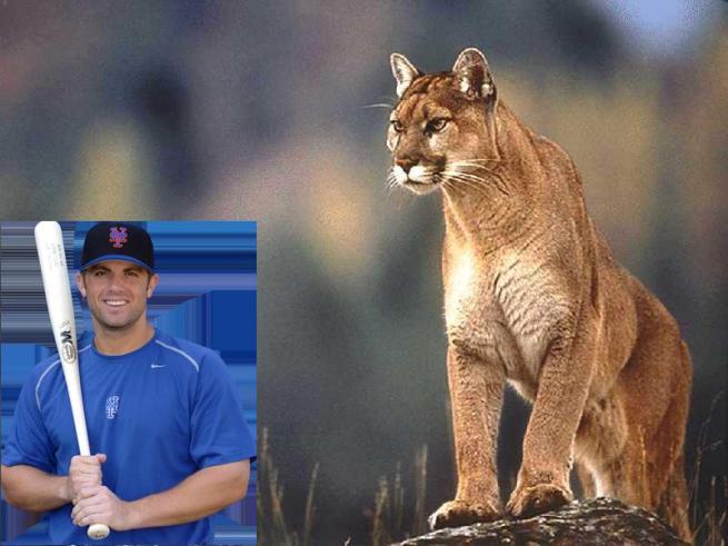 david-wright-cougar